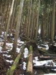 人工林.JPG