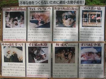中ノ島まつり③.JPG
