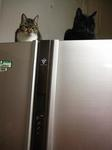 冷蔵庫猫.JPG