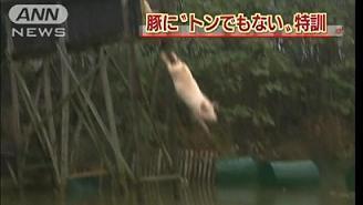 豚の虐待.jpg