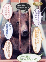 bears2.jpg