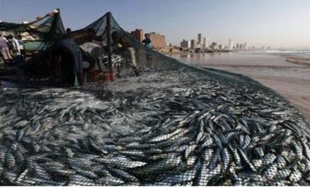17 トロール漁業.jpg
