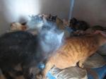 ネコたち.JPG