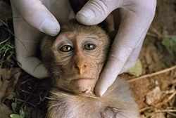 Is-this-beautiful-one-s-life-worth-a-little-casual-experiment-against-animal-cruelty-7327307-615-413.jpg